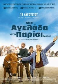 Cyprus : One Man and His Cow (La vache)