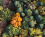300.000 Trees in Lemesos